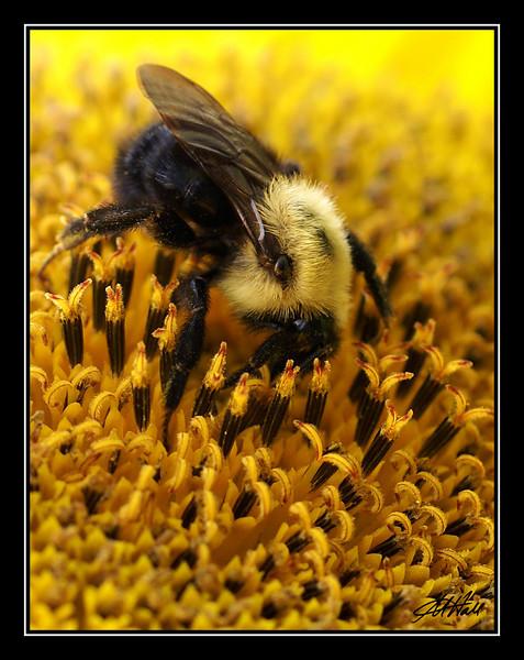 """""""Hungry Bee"""""""