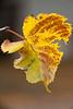 A Randon Leaf