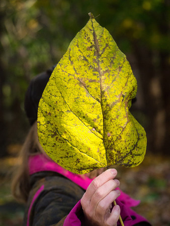 One Big Leaf