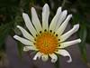 White flower Cape Town SA