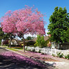 Spring on Kornat Street in Costa Mesa CA