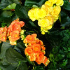 Pretty Flowers at South Coast Plaza in Costa Mesa CA