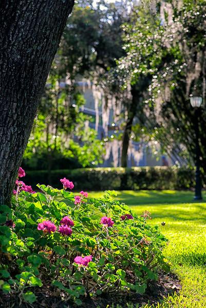 "WPP1541  ""Flowers on the Via"""
