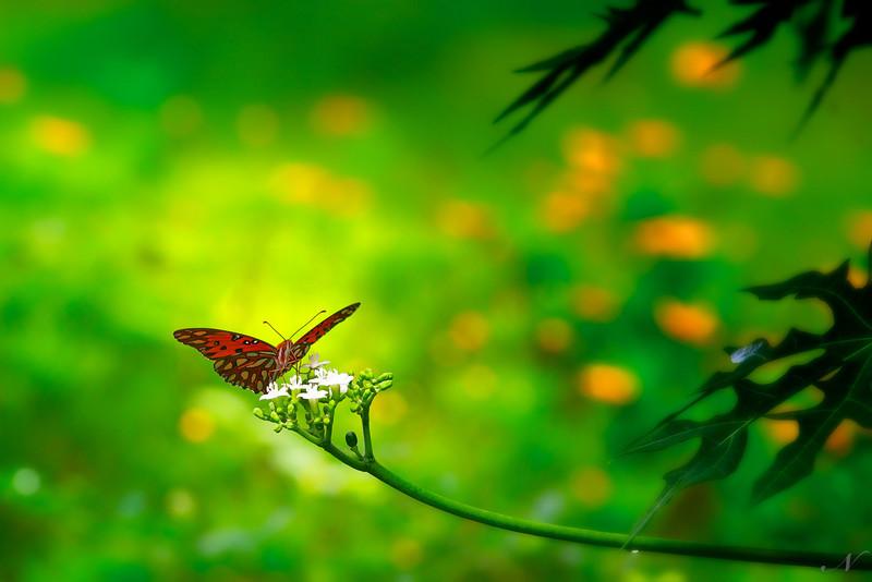 """WPP1260  """"Butterfly Delight"""""""