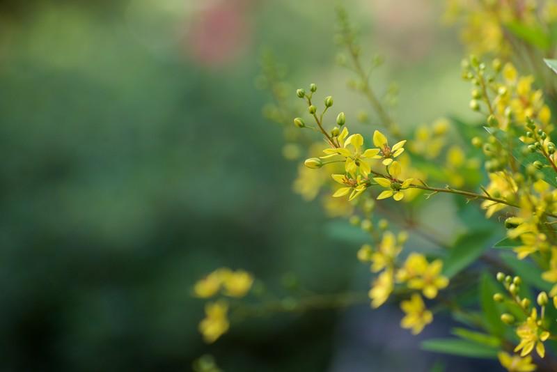 """WPP1267  """"Bright Yellow"""""""