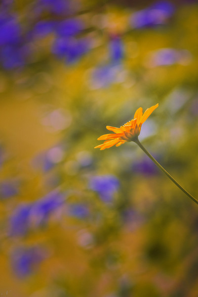 "WPP1238  ""Lonely Yellow Flower"""
