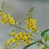 WPP2303  Yellow Sprigs