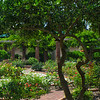 """WPP1538 """"Rose Garden in Central Park"""""""