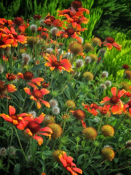 WPP2030  Central Park Flowers