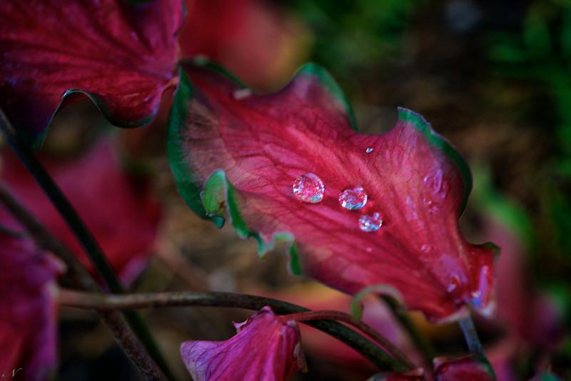 "WPP1237  ""Water Droplets on Angel Wings"""