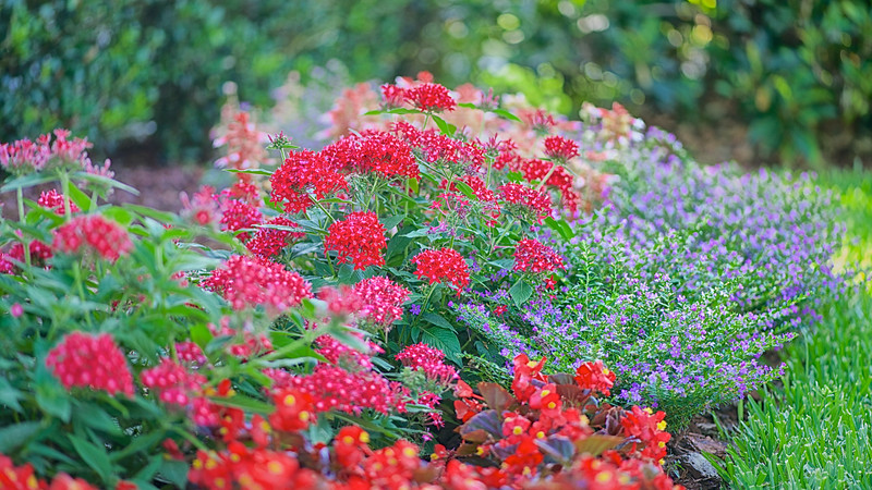 WPP2420  Flowers