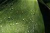 WPP6057  Raindrops