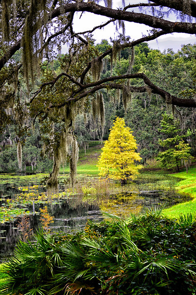 """WPP1524  """"Yellow Tree in Pond"""""""