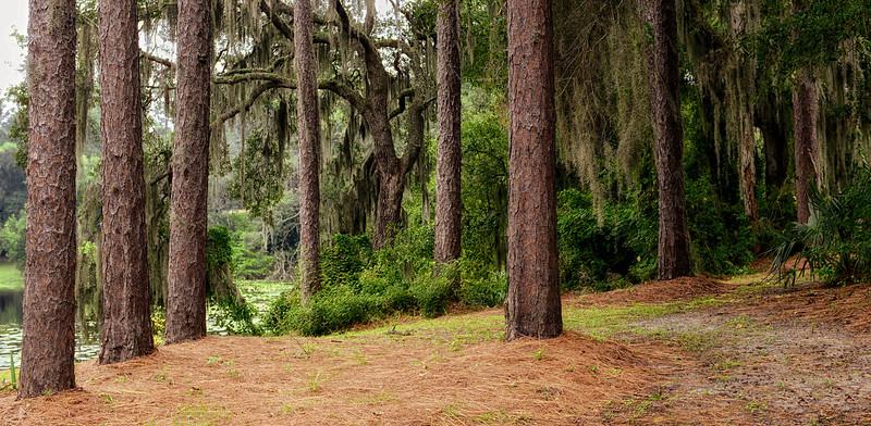 """WPP1526  """"Tree Trunks"""""""