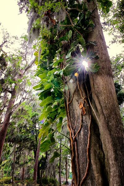 """WPP1273  """"Sunburst between Trees"""""""