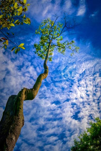 """WPP1513  """"Reach for the Sky"""""""