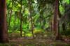 """WPP1272  """"Azalea Garden Scene"""""""