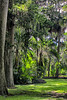 "WPP1540  ""Sunlit Foliage"""