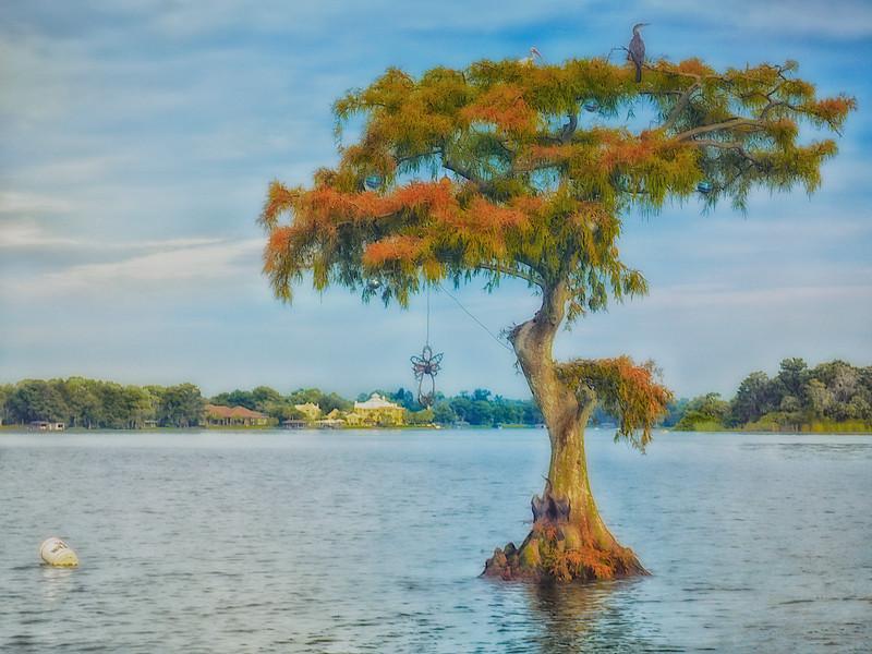 JDA73687 Fall Lone Cypress