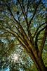 Tree 160