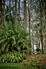 Kraft Azalea Gardens 027