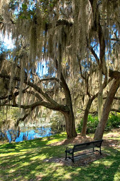 "WPP1529  ""Rest Under the Spanish Moss"" - vertical"