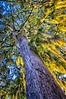 "WPP1535  ""Sunrise through Tree"""