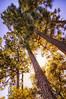 "WPP1534  ""Sunlight through the Trees"""