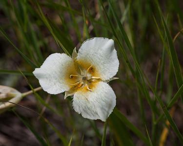 Glacier wild flower