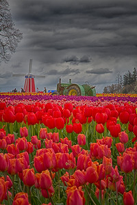 Spring at the tulip fields