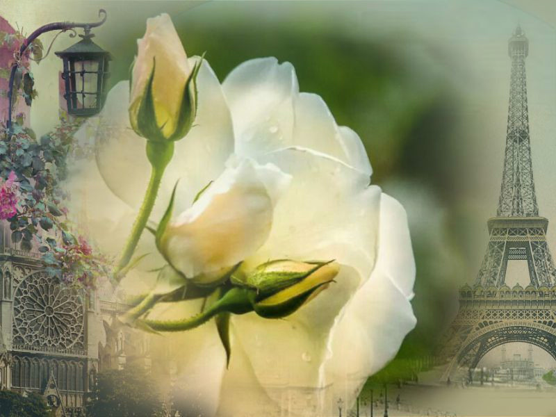 Romance in Paris by Roberta