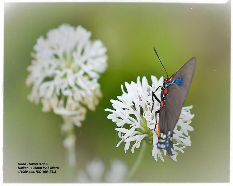 Macro Butterfly - Karen Duda