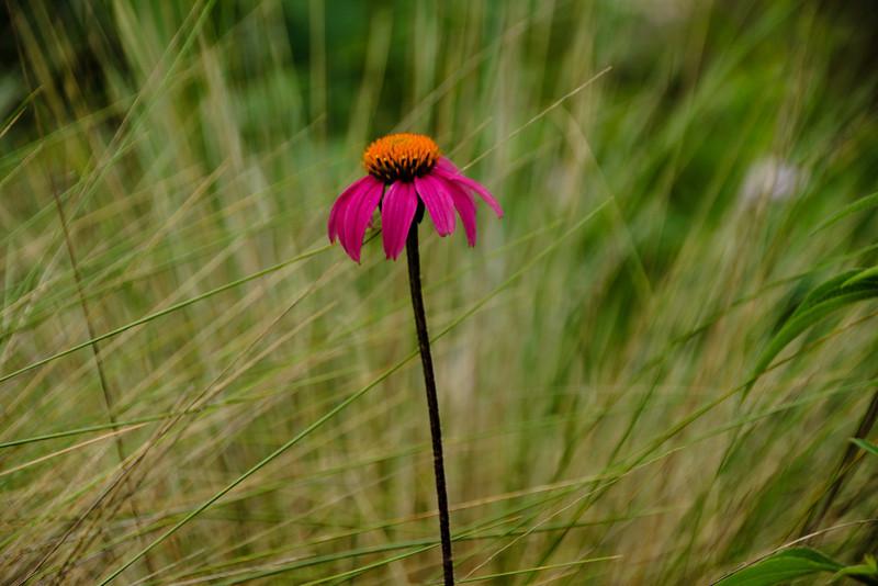 Jill's - the lone flower.......