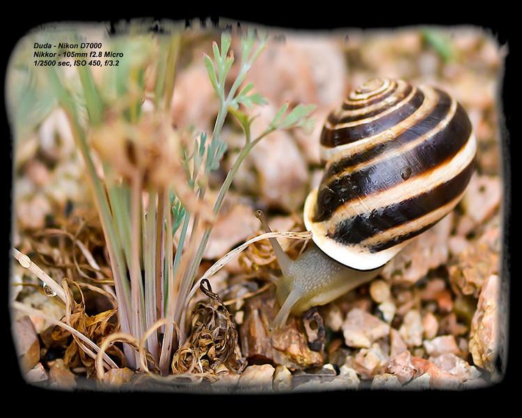 Macro snail - Karen Duda