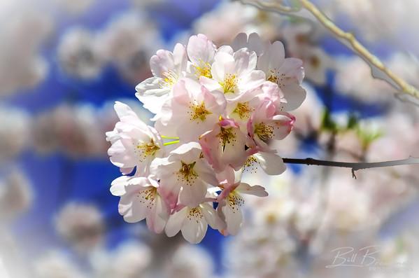 Flower 199