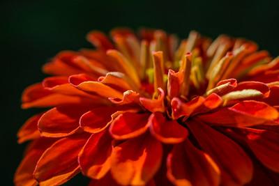 flowers17-007