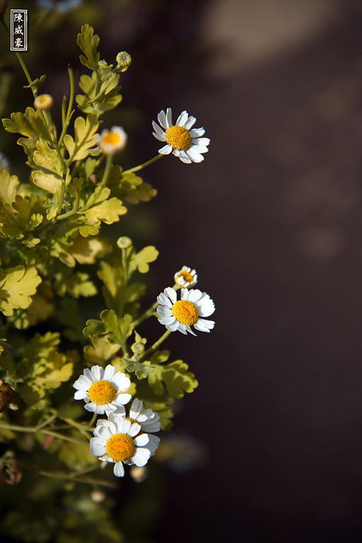IMAGE: http://julianchen.smugmug.com/Photography/Flowers/201004043319resized/827877113_jEpvF-X3.jpg
