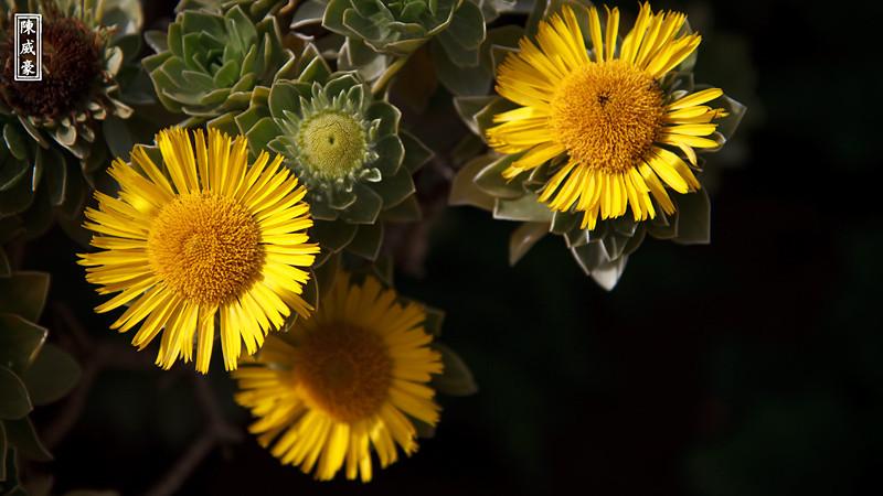 IMAGE: http://julianchen.smugmug.com/Photography/Flowers/201004043325cropped/827877129_sQhd4-X3.jpg