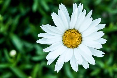 flowers17-009