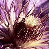 Light Purple, 2001<br /> Film Photography