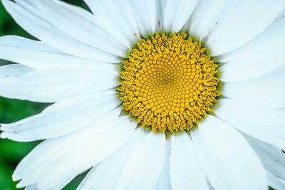 flowers17-002