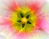Flower 188