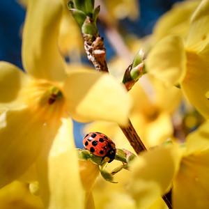 spring-12