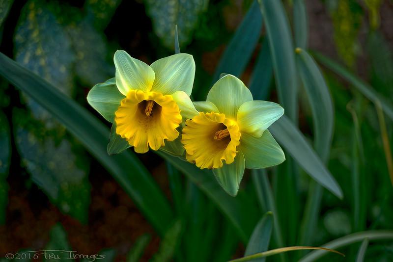 Spring Ambassadors