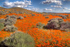 5D 1367 Poppy Reserve of California using Photomatix HDR technique.