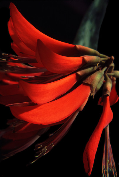 Red Tree, 2002<br /> Film Photography