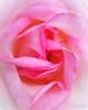 Flower 138
