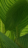 <center><b> Leaf Abstract </b></center>