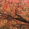 Autumn colour III