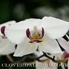 Bazzar_Flower_Show-3717